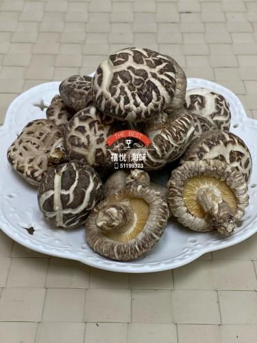 原木白花菇